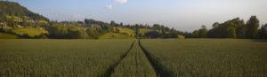 Lush field.
